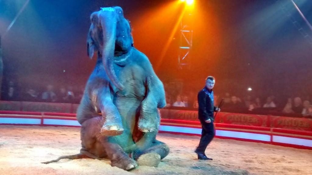 Le Cirque Pinder fête ses 160 ans !, émerveillement pour tous sous le chapiteau/a spectacular show for all ages 4 image