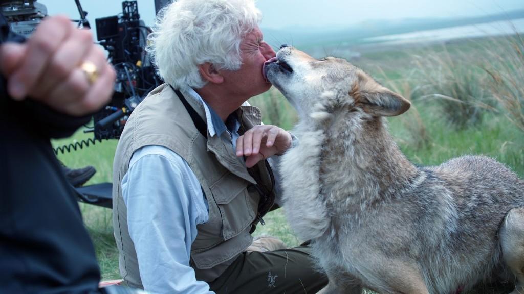 Le Dernier Loup image film cinéma
