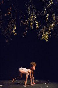 cirque plume image la dernière saison-2