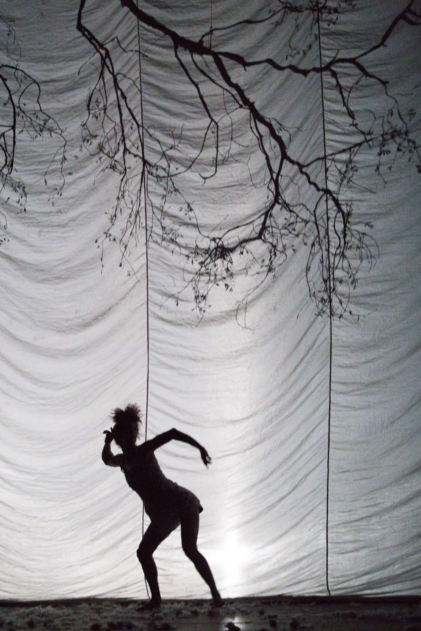 cirque plume image la dernière saison-5