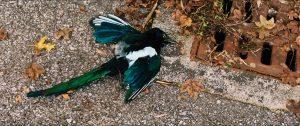 L'ornithologue film photo