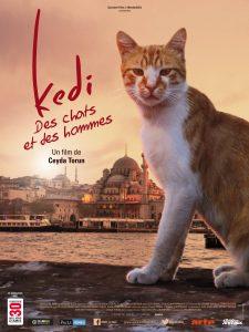 Kedi affiche film