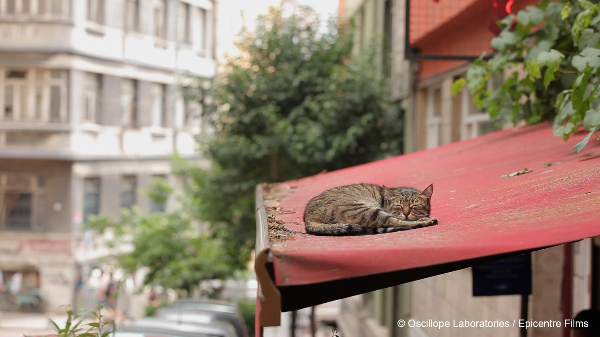 Kedi photo film 1