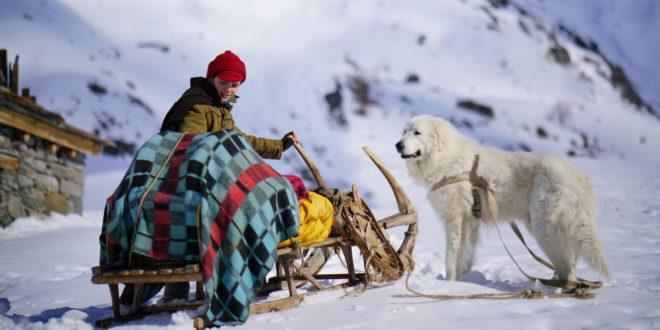 Belle et Sébastien 3 : Le dernier chapitre film photo 4 concours