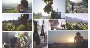 Wine Calling- Le vent se lève affiche film documentaire