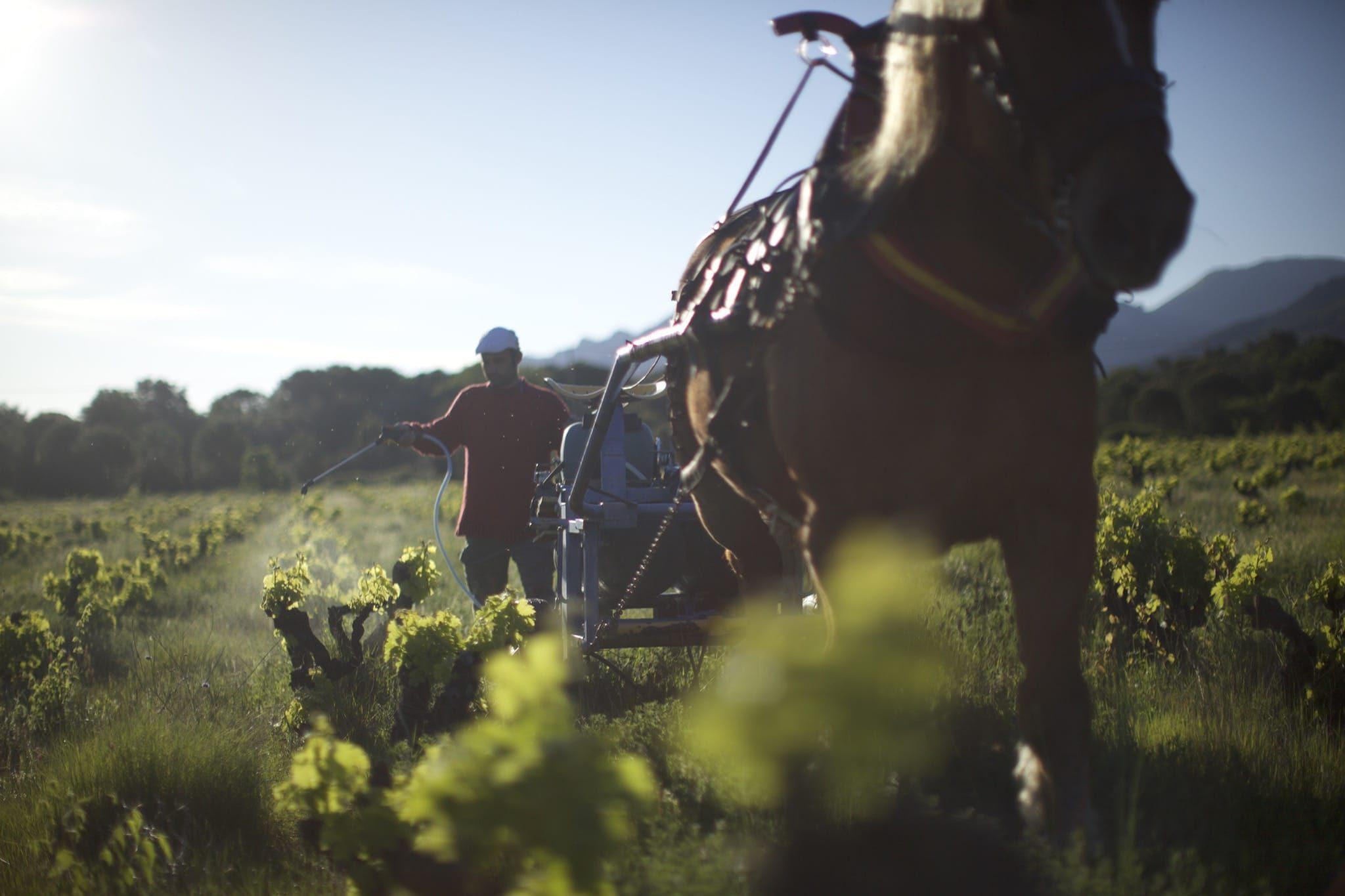 Wine Calling- Le vent se lève image film documentaire