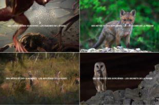 Capture d'écran site internet de Nomades TV images documentaires
